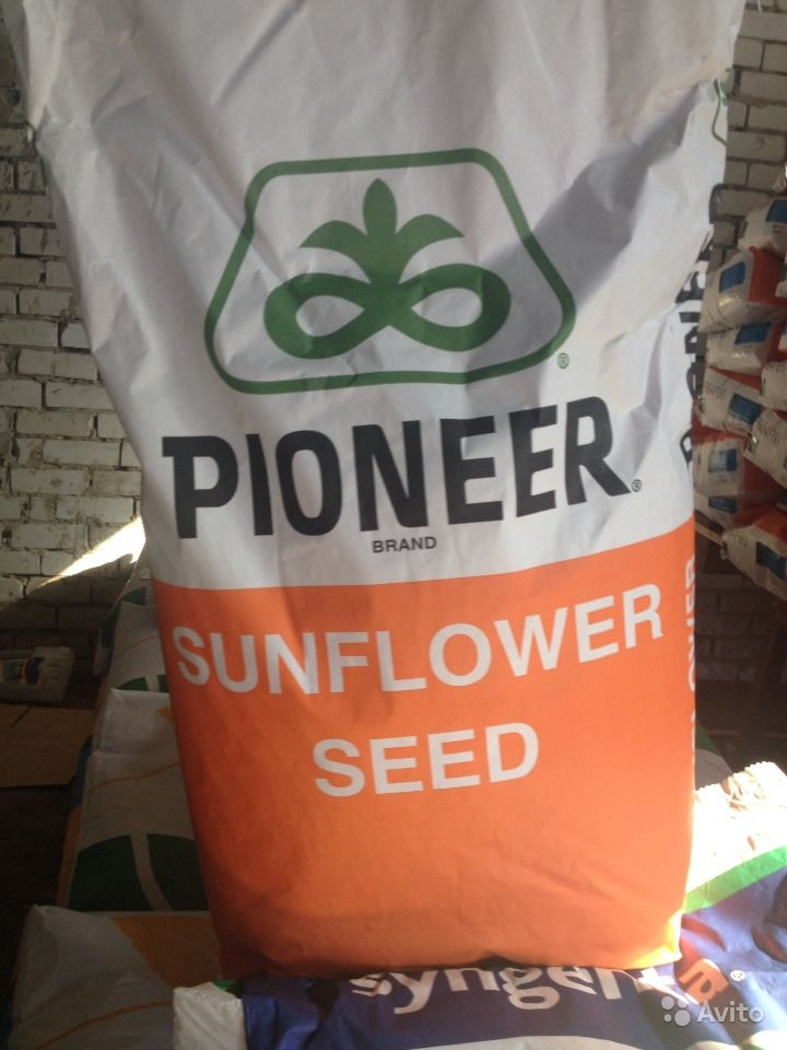 Семена подсолнечника. Импорт syngenta/ pioner/ LG купить на Зозу.ру - фотография № 2
