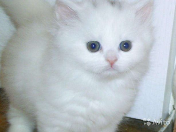 Беленькие котятки