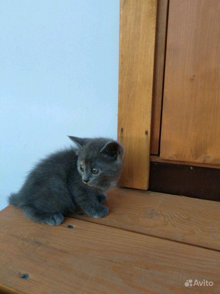 Отдам котят в Анапе - фотография № 7