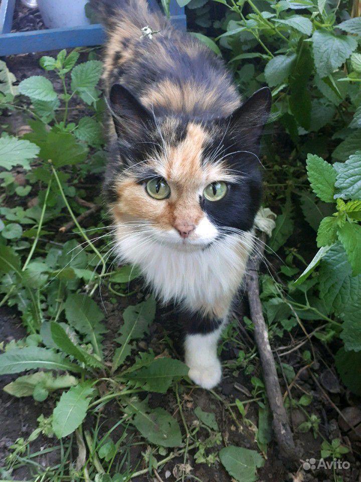 Кошка, 1 год, помогу материально со стерилизацией