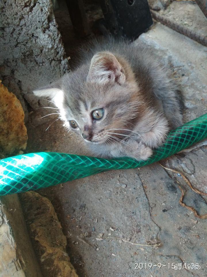 Кошечка ищет хозяйку