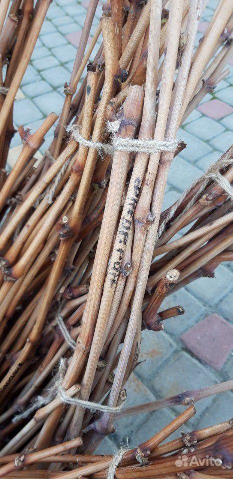 Черенки винограда купить на Зозу.ру - фотография № 2