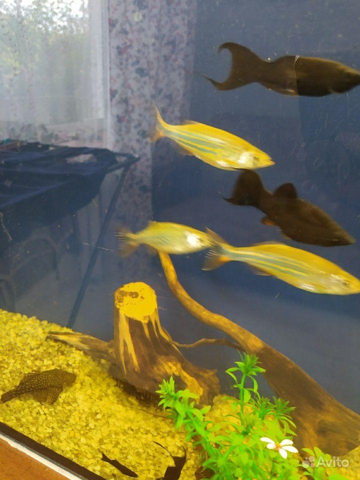 Аквариум 80л + рыбки купить на Зозу.ру - фотография № 6