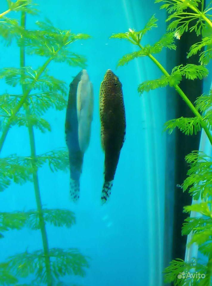 3 аквариума купить на Зозу.ру - фотография № 4