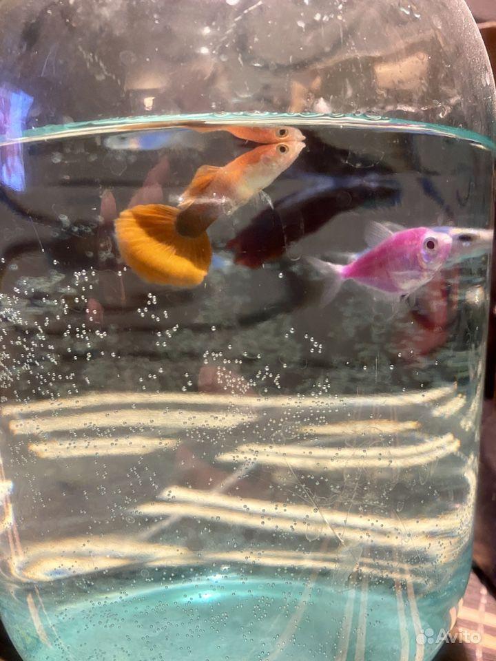 Аквариум с рыбками купить на Зозу.ру - фотография № 4