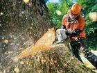 Спилка деревьев, сухостоев