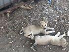 Бездомные щенки ищут хозяина