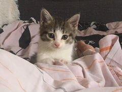 Кошечка 3 месяца