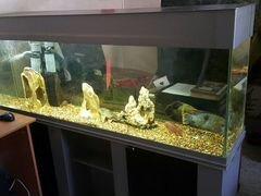Аквариум с тумбой, рыбками, фильтры и камни