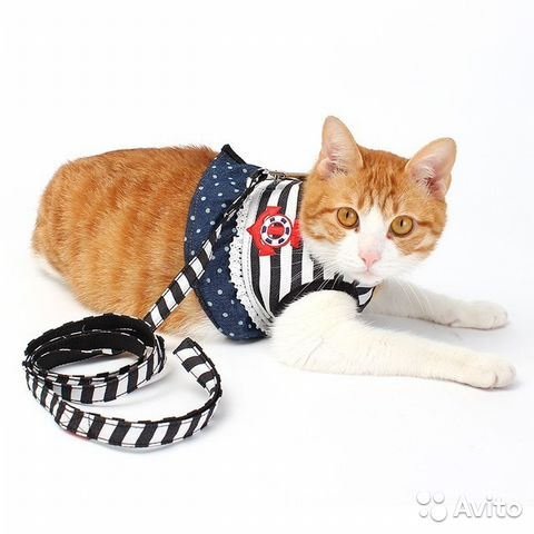 Where can i buy a cat harness