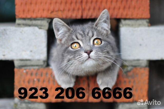 Мегафон и кот