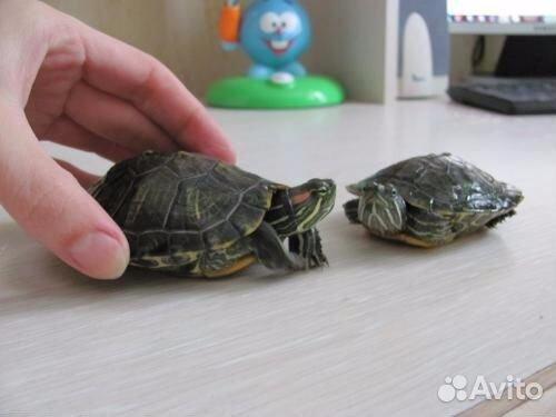 Обогреватель для красноухих черепах