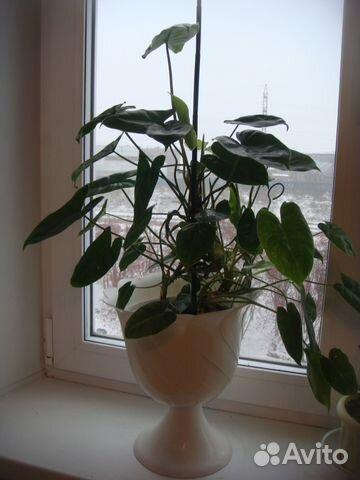 Горшечные цветы купить новосибирск