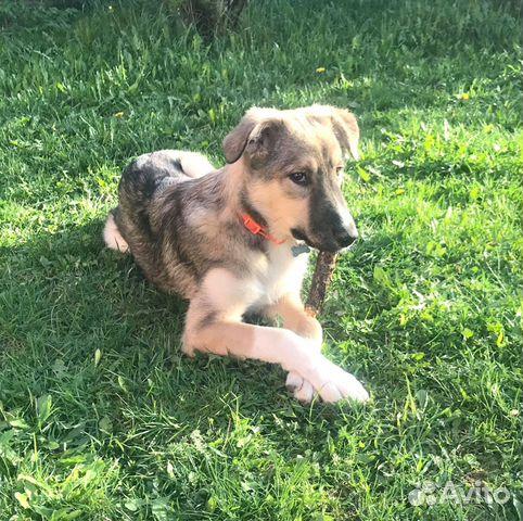 Замечательный и необыкновенный Беня - щенок в дар купить на Зозу.ру - фотография № 2