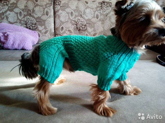 Товары для собак брест