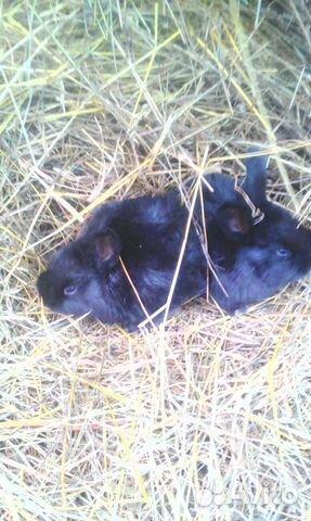 Продам месячных крольчат 89082951331 купить 6