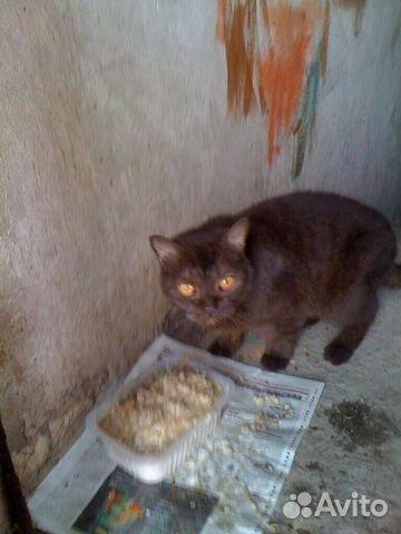 Красивый котик каштанового цвета
