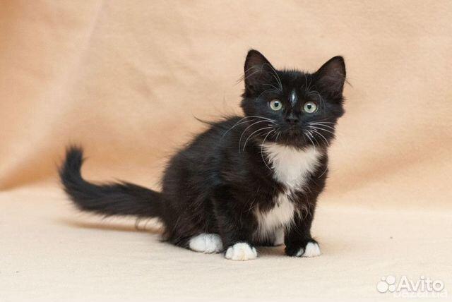Котята ищут дом 89515756829 купить 3