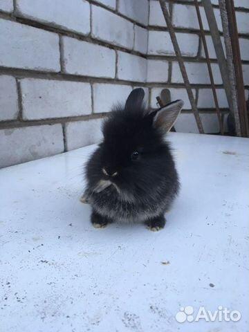 Dwarf rabbits  89997886395 buy 5
