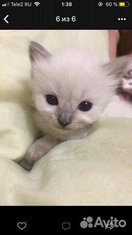 Котята в добрые руки  89000273244 купить 1