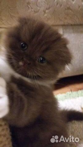 Очаровательные котята  89132492220 купить 2