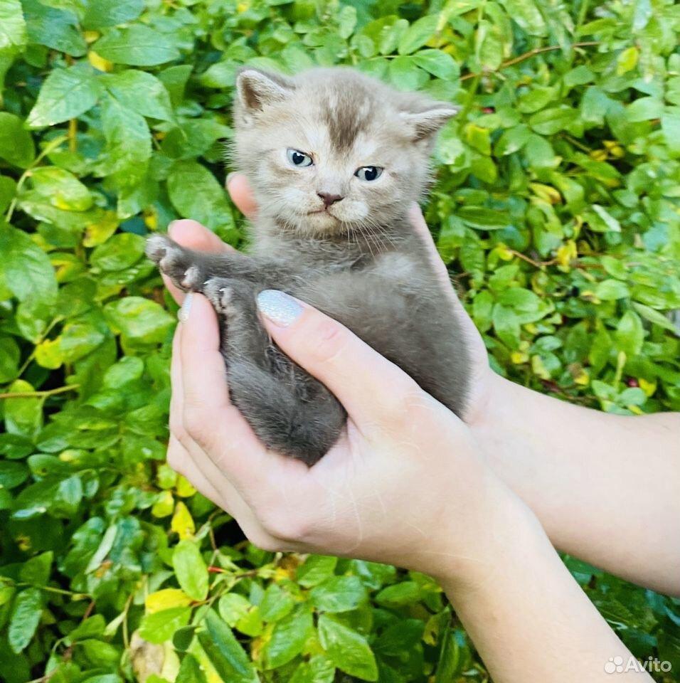 Кошечки и котики  89807082745 купить 8