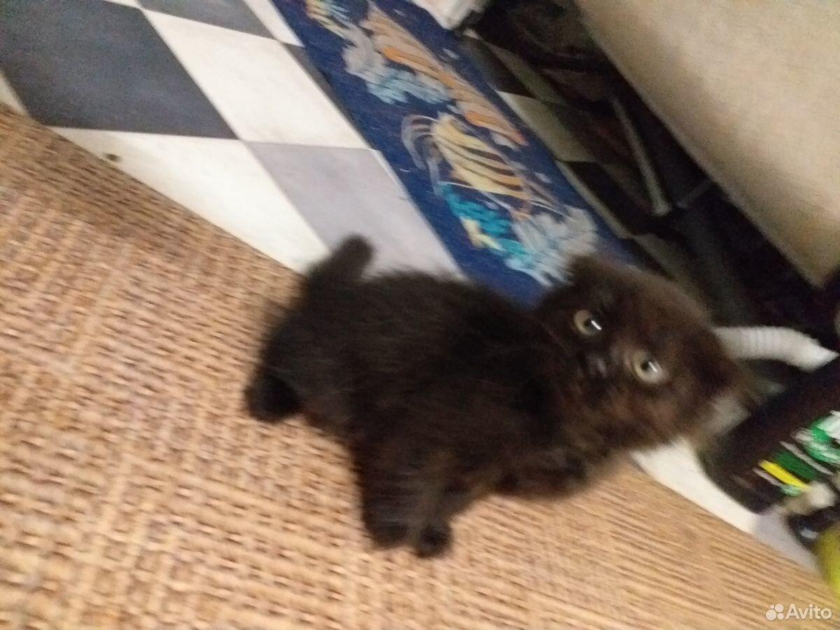 Продаю котят  89228220557 купить 2