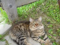Кот подросток