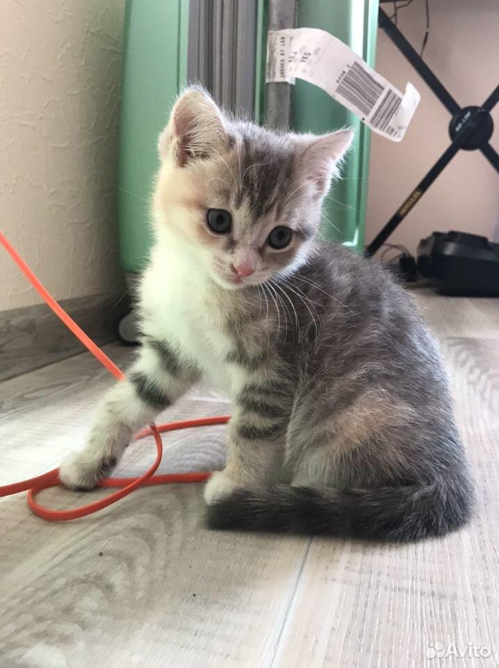 Отдам котят  89132857443 купить 3