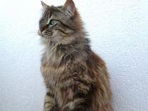 Особенный котик ищет дом (кастрирован, привит) — Кошки в Геленджике