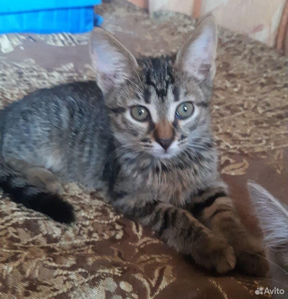Котята две сестры и братик  89107128313 купить 6