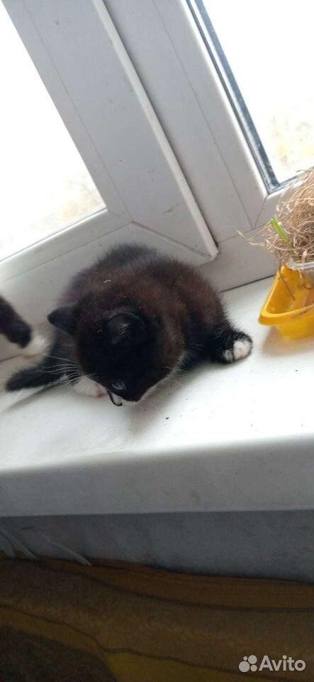 Кошка  89059831610 купить 3