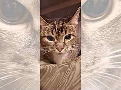 Приученная к лотку кошка