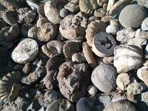 Аммониты Окаменелости Минералы — Коллекционирование в Геленджике