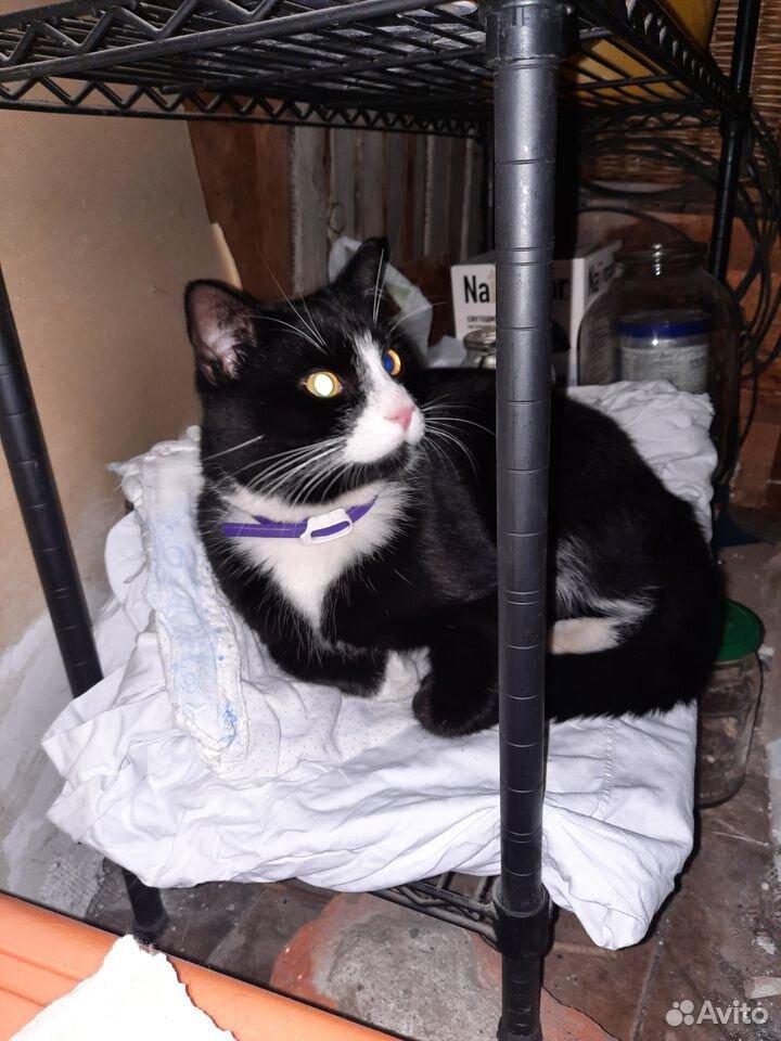 Найден кот  89110716077 купить 1