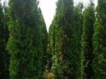 Большие крупномеры готовые деревья