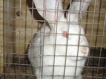 Продам больших И маленьких кроликов