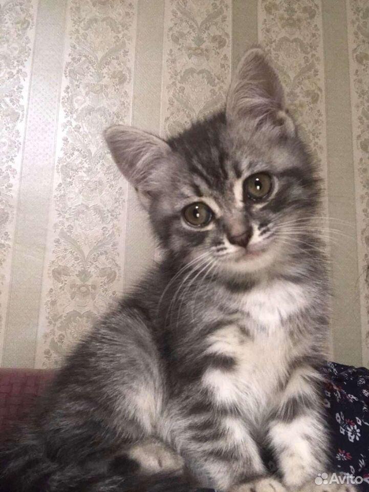 Кошка  89198214683 купить 1