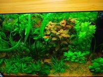 Аквариум, растения