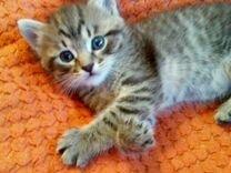 Котёнок (кот)
