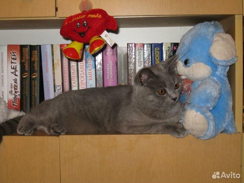 Кошка в добрые руки  89510739055 купить 1